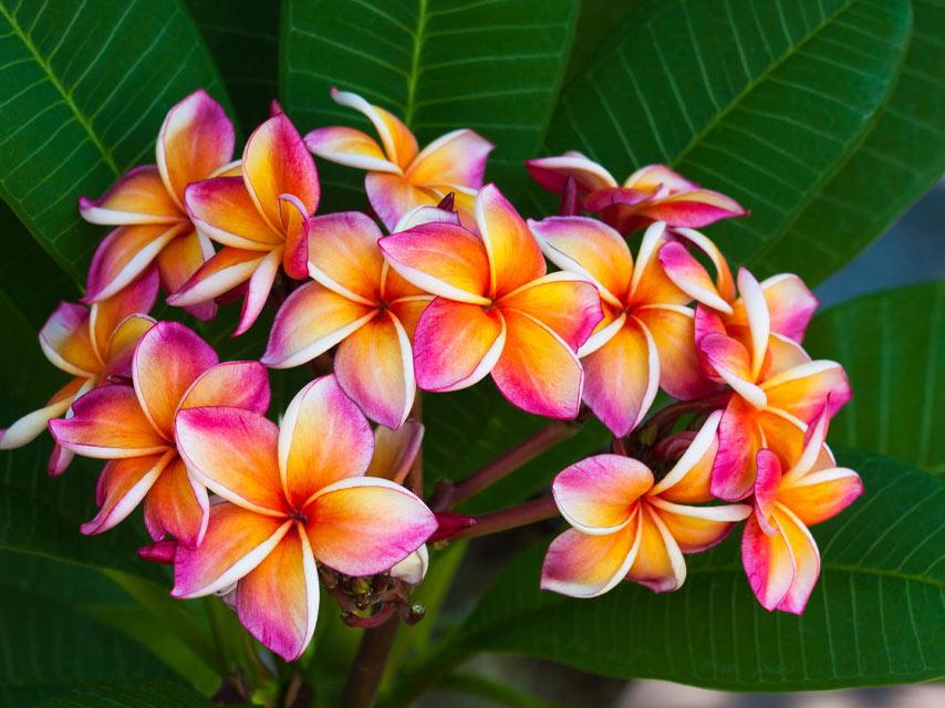 fleur-fleur